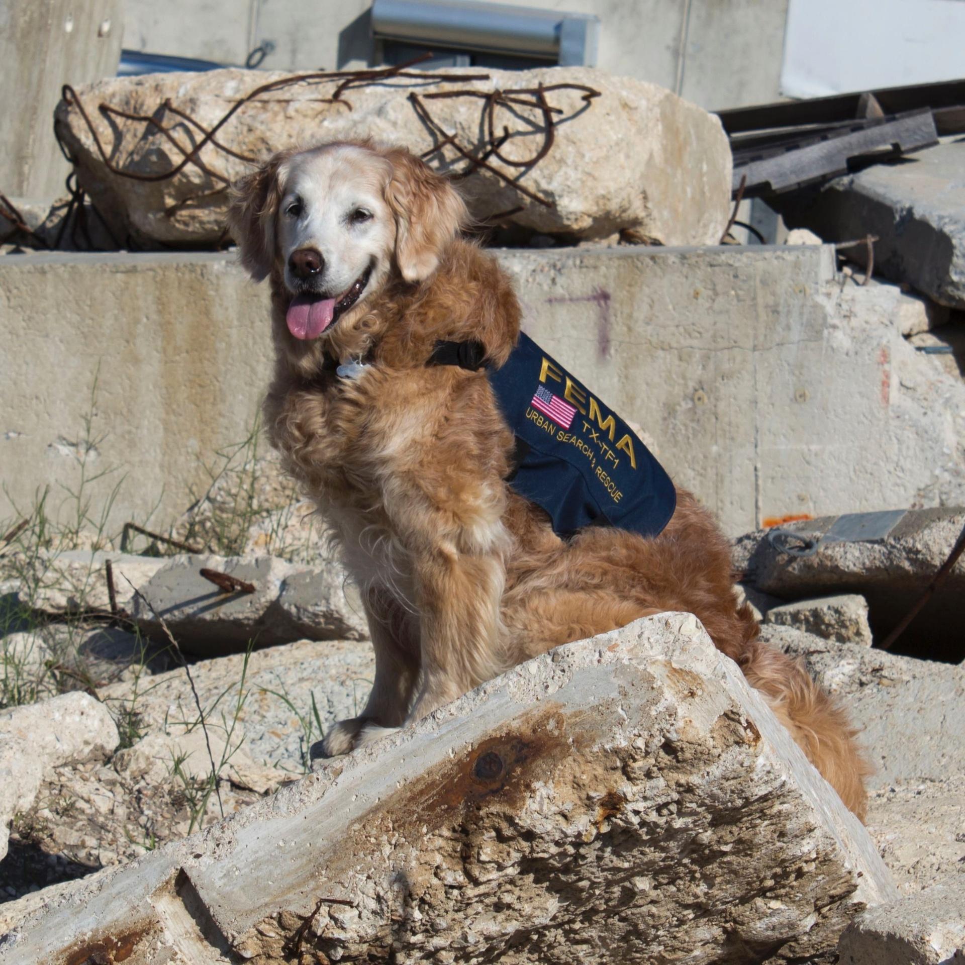Bretagne tinha 1 ano quando participou do resgate no atentados em Nova York