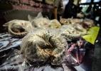 Juni Kriswanto/ AFP