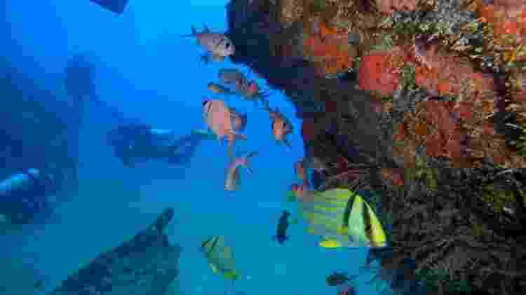 Naufrágio do Draguinha, em Alagoas, analisado em busca de contaminação por óleo - Luis Miguel Filipe/Let's Drive - Luis Miguel Filipe/Let's Drive