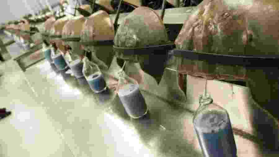 Um litro de sangue de caranguejo-ferradura pode ser vendido por US$ 15 mil - Getty Images