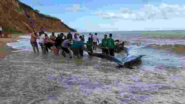Operação para salvar baleia se tornou mais complicada por conta da localização isolada da praia - Instituto Biota - Instituto Biota