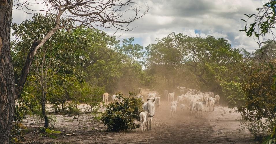 Comunidades tradicionais ocupam o solo de modo não predatório