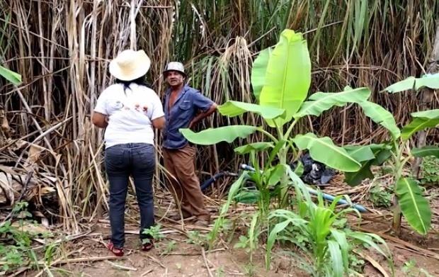 20.nov.2015 - Às margens do rio Doce, agricultores temem que rejeitos de mineração que estão nas águas possam contaminar solo