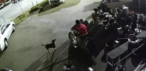 Imagem de câmera de segurança mostra o cão na loja de pneus
