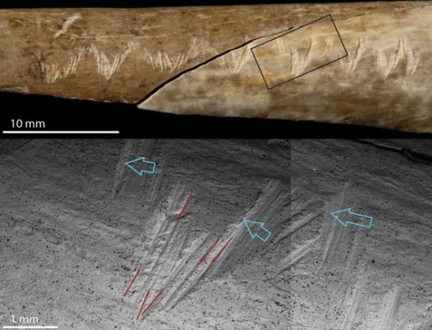 Os ossos também foram mastigados, mas estas não são marcas de dentes