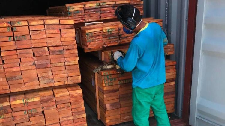 Operação Arquimedes, do MPF, fez a maior apreensão de madeira ilegal da história da Amazônia este ano - Polícia Federal/Divulgação