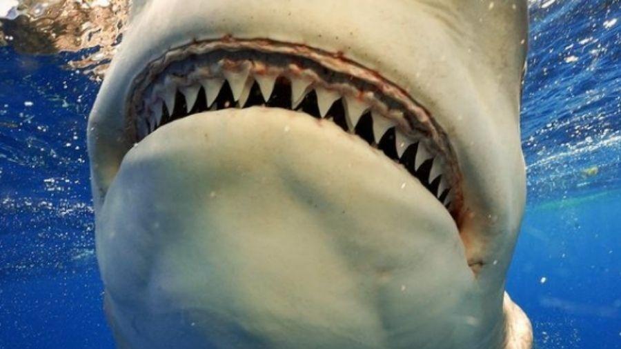 Fotógrafo diz que é mais fácil o tubarão temer os humanos do que o contrário - Reprodução/Instagram