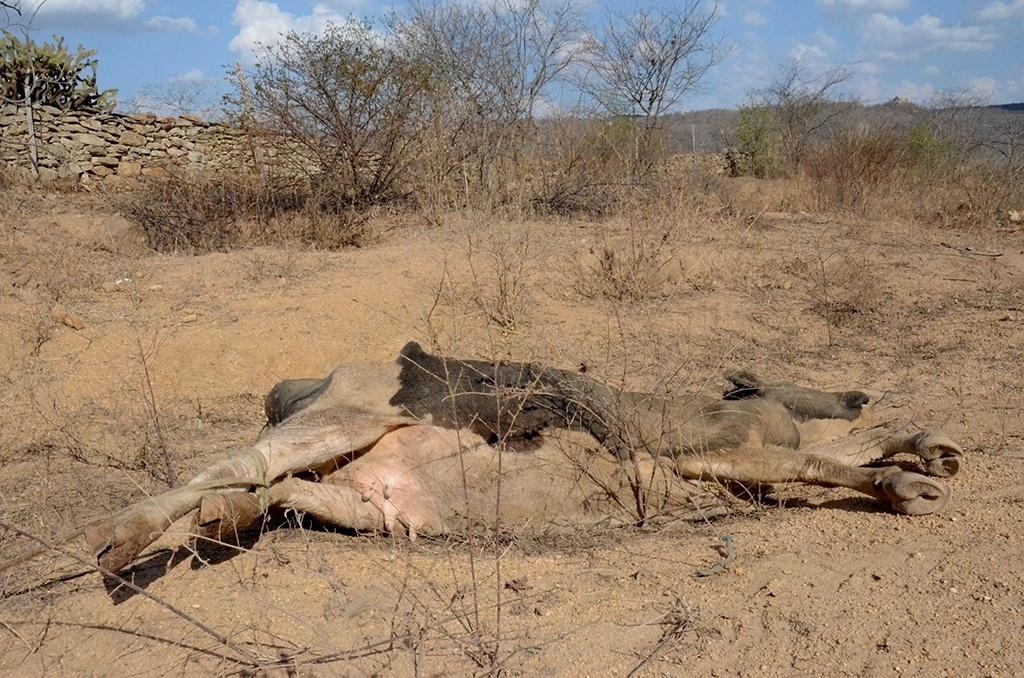 19.dez.2016 - Eronildes Ferreira, presidente do Sindicato dos Trabalhadores Rurais de Alagoinha (PE), conta que já é comum ver animais mortos onde costumava ter água na cidade.
