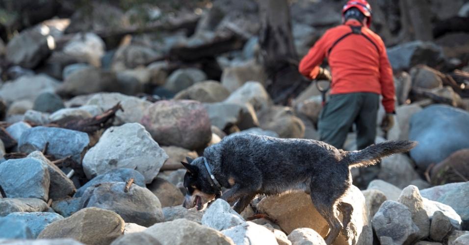 10.jan.2018 - Cão faz buscar por corpos em área da cidade de Montecito