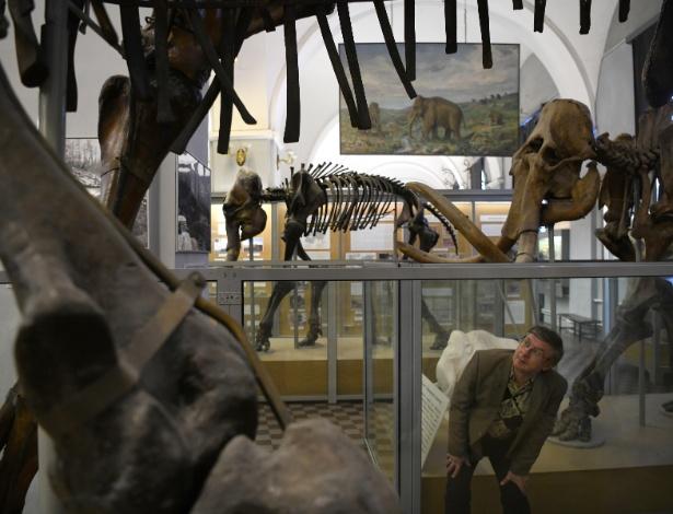 Alexei Tikhonov, diretor do Museu de Zoologia, entre os mamutes do museu de São Petersburgo, Rússia - James Hill/NYT
