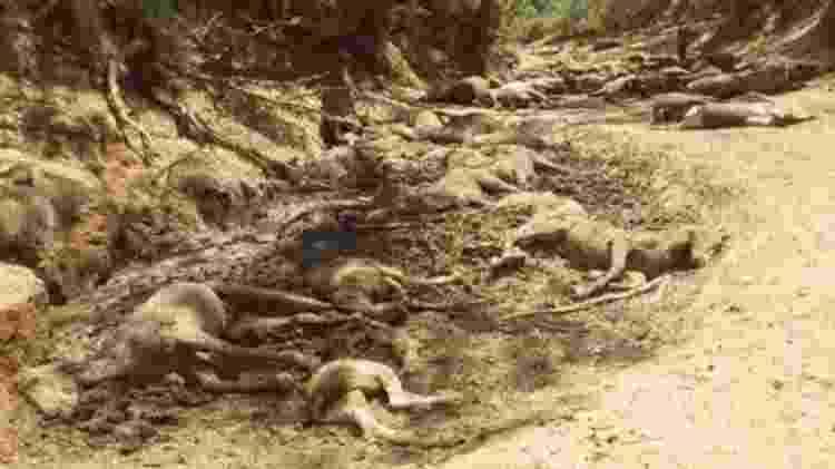 'Eu fiquei arrasado. Nunca tinha visto nada parecido --todos aqueles corpos', disse morador da região que esteve no local das mortes - Ralph Turner/BBC - Ralph Turner/BBC