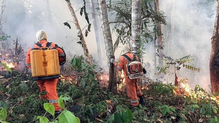 Índices de desmatamento da Amazônia batem recorde atrás de recorde - EPA