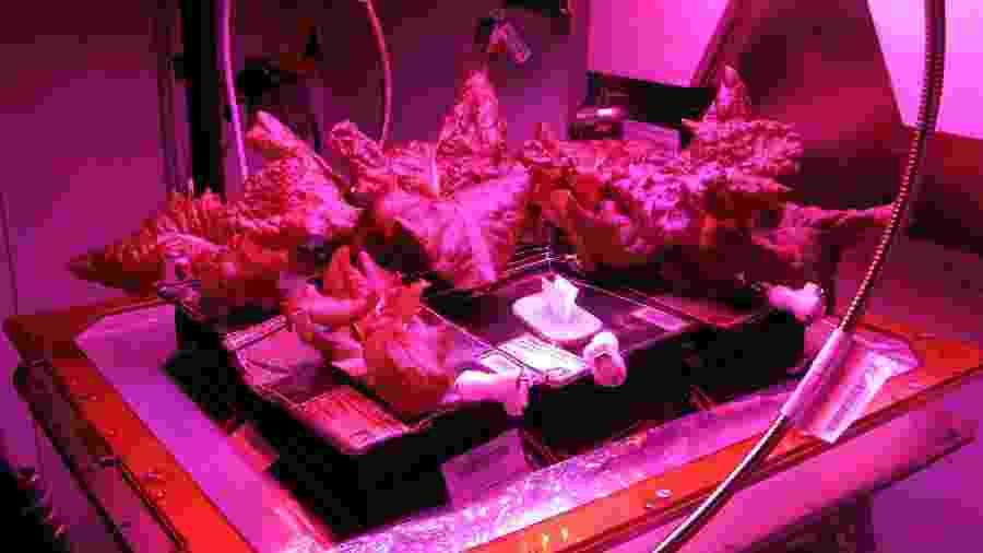 Alface cultivada na Estação Espacial Internacional - Divulgação/Nasa
