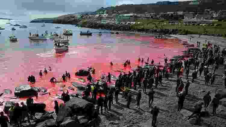Caça de baleias, como a desta foto em Torshavn em 2019, é organizada pela própria comunidade - Getty Images - Getty Images