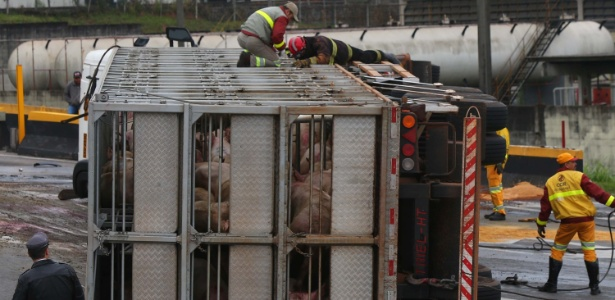 25.ago.2015 - Carreta de porcos tombou no Rodoanel nesta terça-feira - Marcos Bezerra/Futura Press/Estadão Conteúdo