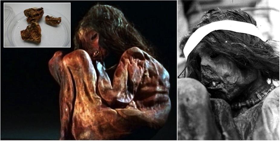 16.nov.2015 - Uma equipe internacional conseguiu decifrar parte do genoma da múmia de um menino inca de 7 anos foi sacrificado há 500 anos em um ritual chamado capacocha, em que se levava para o topo das montanhas crianças saudáveis para serem mortas e abandonadas. O corpo do garoto foi encontrado no monte Aconcágua, na Argentina, em 1985, por montanhistas. Essa foi a primeira vez que pesquisadores conseguiram isolar e colocar em ordem os genes de uma múmia. A descoberta sugere que a região da Cordilheira dos Andes tinha muito mais diversidade genética antes da chegada dos espanhóis no continente americano