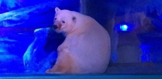 As imagens que mostram o urso Pizza com uma expressão que parece ser de tristeza correram o mundo