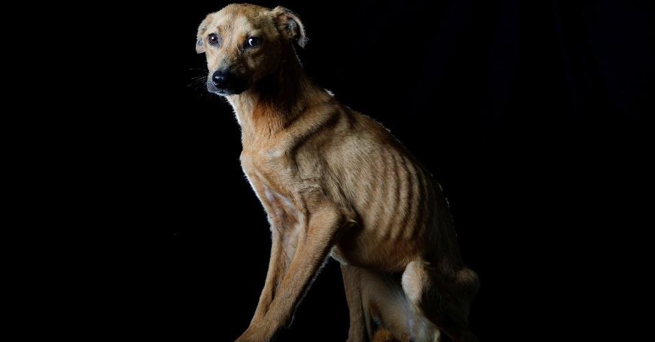 """SONRISA - """"Sonrisa [Sorriso] ganhou esse nome porque, quando alguém se aproxima dela, ela fica apavorada como se fosse apanhar, mas mostra os dentes como se estivesse sorrindo"""", conta Maria Silva, que cuida dos cachorros no abrigo Famproa, em Los Teques, na Venezuela. Sonrisa morreu uma semana depois de a foto ter sido tirada"""