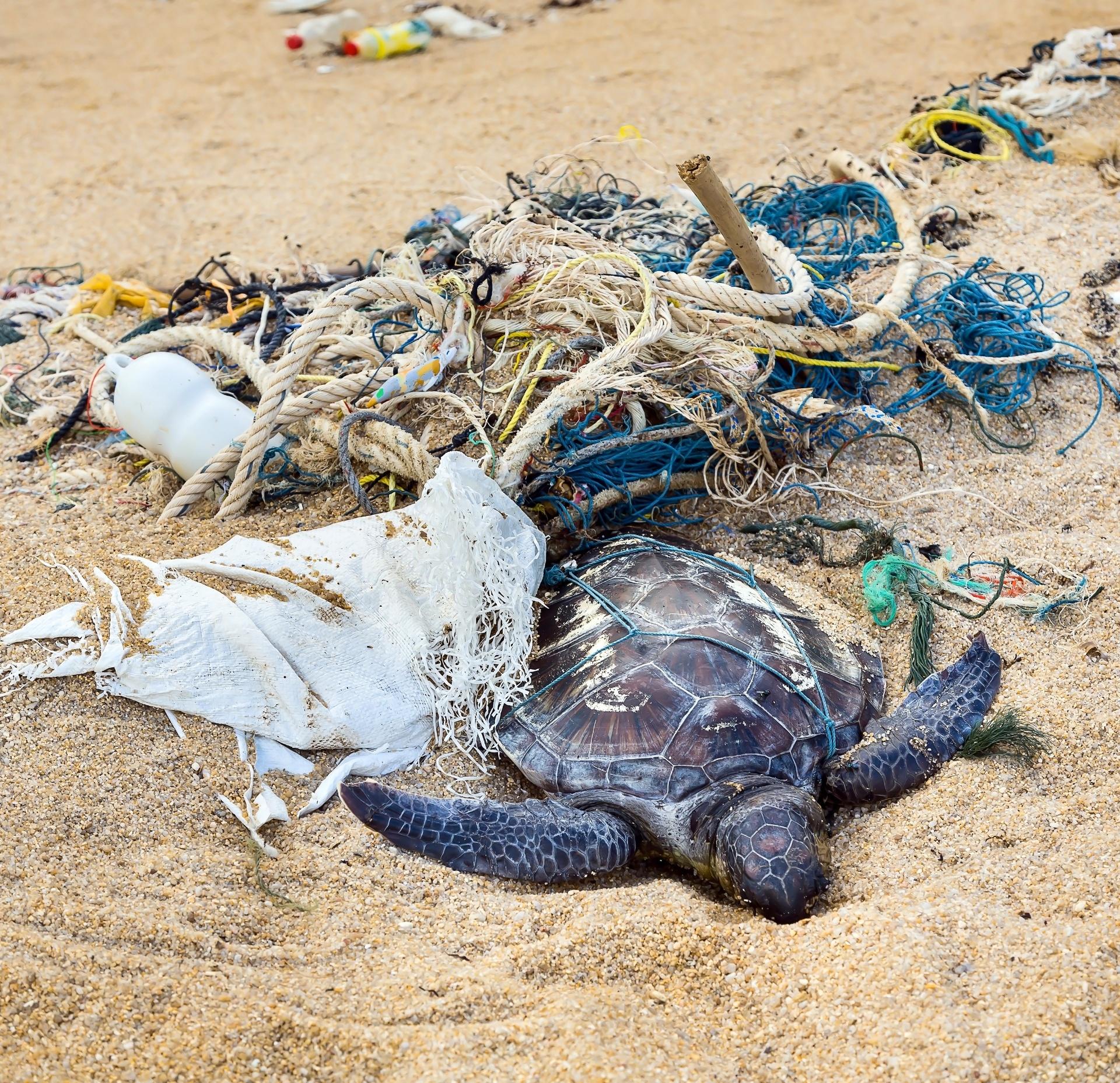 29.set.2016 - Pedaços grandes de plástico como redes de pescar são perigosos e estrangulam animais. Mas por ser pequeno, o microplástico pode ser engolido por um número muito maior de bichos