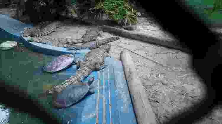 Jacarés convivem com tartarugas em um espaço reduzido. Imagem foi registrada em inspeção  - Divulgação