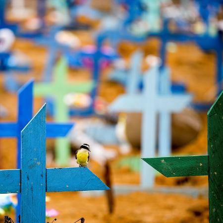 Um pássaro é fotografado sobre uma cruz durante um enterro coletivo de pessoas que morreram devido à doença de coronavírus, no cemitério Parque Taruma, em Manaus - BRUNO KELLY/REUTERS