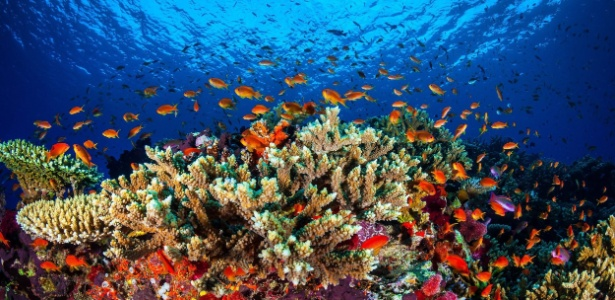 Peixes e outros animais circulam por coral da Grande Barreira de Corais, na costa de Queensland, Austrália