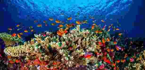 31.jan.2016 - Em imagem não datada, peixes e outros animais circular por coral da Grande Barreira de Corais, na costa de Queensland, Austrália. Uma pesquisa feita por pesquisadores da Universidade James Cook descobriu que mais de três quartos dos australianos veem a barreira, uma das 7 Maravilhas da Natureza, como parte da identidade nacional - Universidade James Cook/EPA/Efe - Universidade James Cook/EPA/Efe