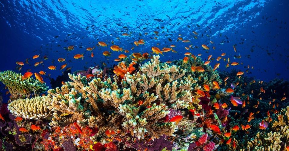 31.jan.2016 - Em imagem não datada, peixes e outros animais circular por coral da Grande Barreira de Corais, na costa de Queensland, Austrália. Uma pesquisa feita por pesquisadores da Universidade James Cook descobriu que mais de três quartos dos australianos veem a barreira, uma das 7 Maravilhas da Natureza, como parte da identidade nacional