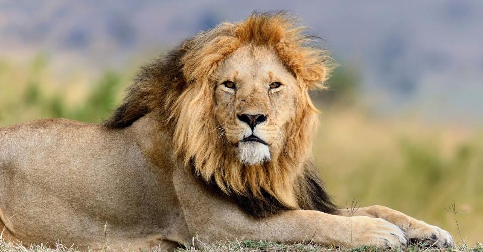 Leão; Imposto de Renda