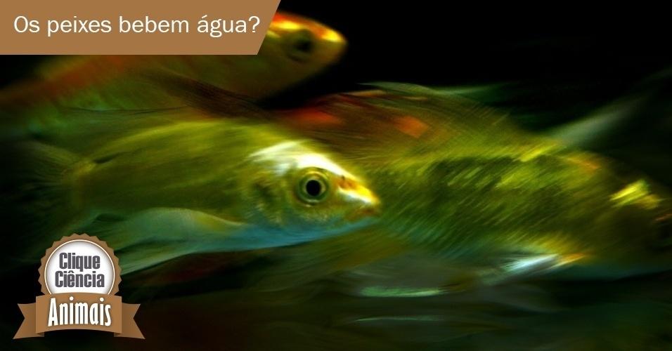Os peixes bebem água?