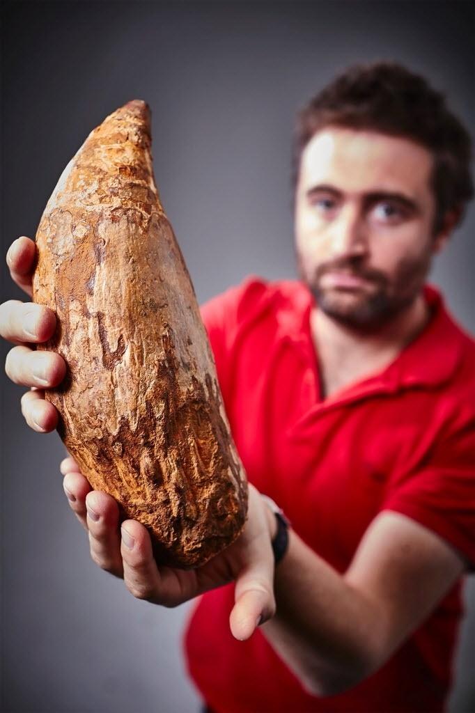Um enorme dente de cachalote foi achado em uma praia em Beaumaris Bay, perto de Melbourne (Austrália). O dente fossilizado mede 30 cm e teria 5 milhões de anos