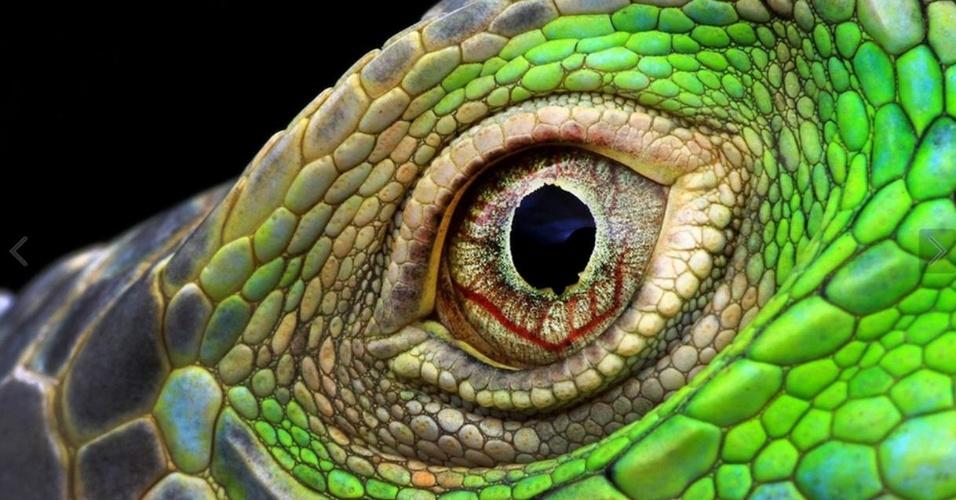 Uma piscada pode te fazer perder o momento certo de tirar a foto - como esse close bem no fundo dos olhos de uma iguana
