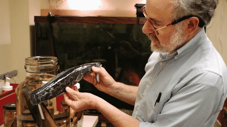 Biólogo Richard Horwitz mostra um cabeça-de-cobra encontrado em 2005 na Filadélfia. Acredita-se que muitos desses peixes foram introduzidos intencionalmente por pessoas que os compraram como peixes ornamentais - Getty Images