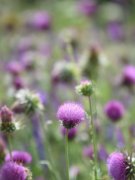 Presentes delicados, flores nos sonhos têm representações diferentes do que pode acontecer em nossas vidas - Getty Images