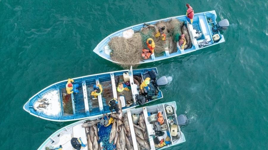 Pescadores de cidades próximas a San Felipe se beneficiaram com a extração ilegal da totoaba - Sea Shepherd