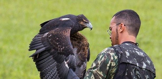 Gaviões e falcões treinados para reforçar o combate a acidentes aéreos apareceram mortos