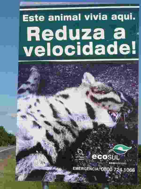 Ecosul/Divulgação