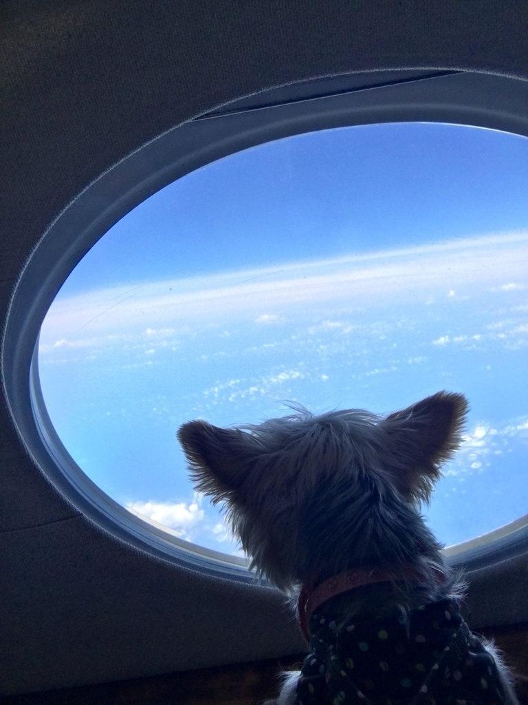 Voos de luxo para cães - cão de Zoe Man