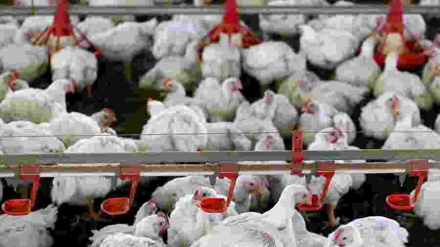 Hoje, uma amostra de frango do Brasil comprada pela China testou positivo para coronavírus - Rodolfo Buhrer/Reuters