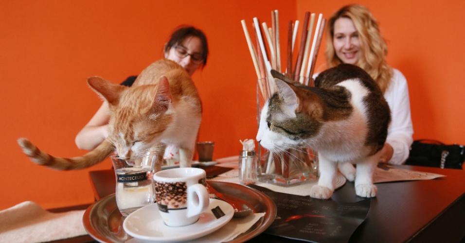 14.mar.2016 - Aberto no final de 2015 na cidade de Brno, na República Tcheca, esse estabelecimento oferece além de café quentinho, chás e comida caseira, todo amor que pode ser dado por gatinhos abandonados