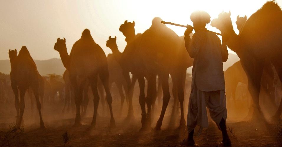 7.nov.2016 - Comerciante chega com seus camelos na Feira de Pushkar, trazidos para serem vendidos e negociados no estado de Rajasthan, na India