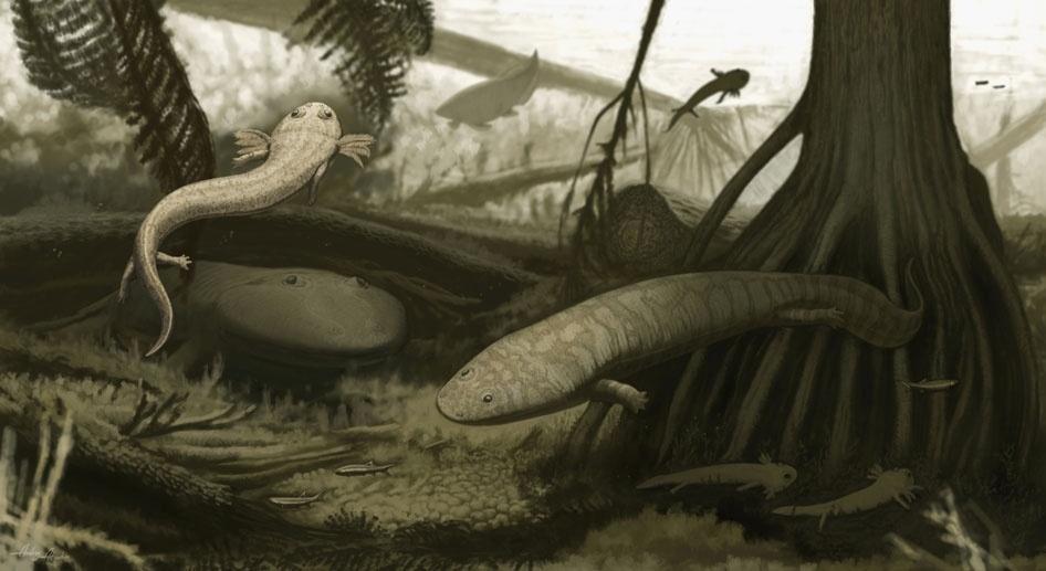 """05.nov.2015 - A espécie Timonya annae era um animal de 40 centímetros que, nas palavras do NHM, """"parecia um cruzamento entre uma salamandra mexicana moderna e uma enguia"""""""
