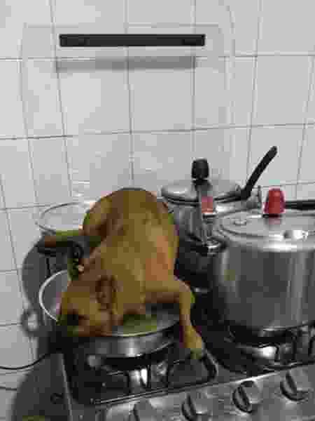 Filtro de cachorro no Instagram é a coisa mais legal que você vai ver hoje - Reprodução