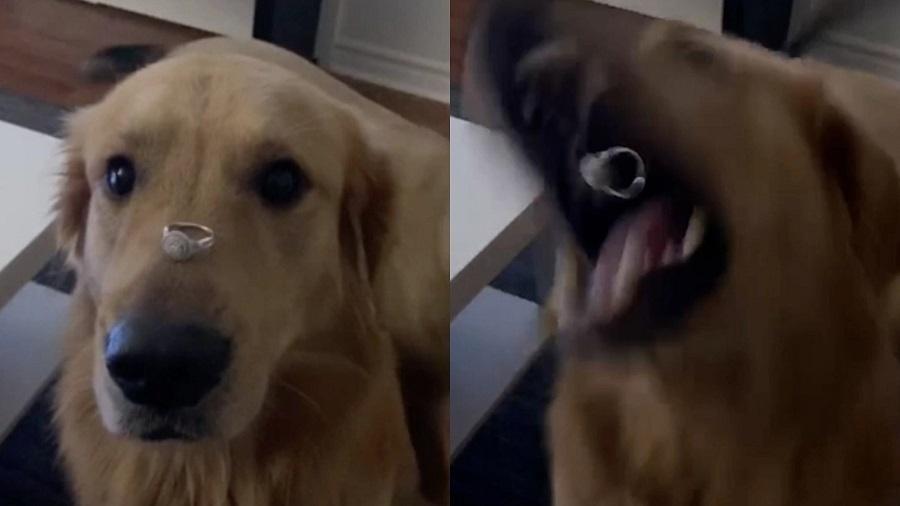 Diversas pessoas criticaram a ideia da mulher de colocar o anel no focinho do cachorro - Reprodução/Reddit/DanyHeatley50in07