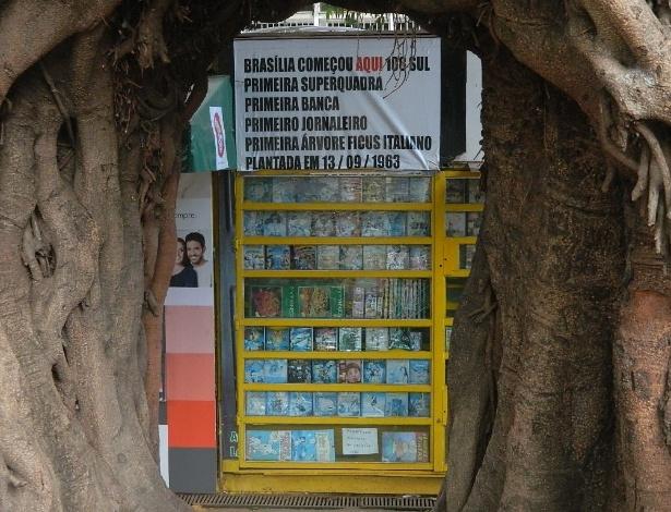 Alguns anos após o surgimento da primeira banca de jornal de Brasília, seu proprietário plantava as árvores que hoje são a marca registrada do estabelecimento - Jéssica Nascimento/UOL