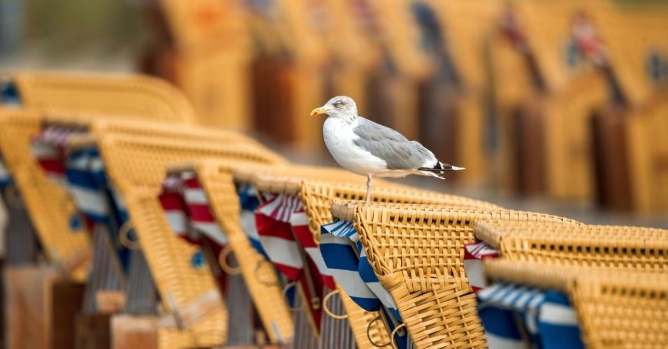 23.set.2016 - Gaivota descansa pousada em cadeira de praia de vime na praia de Timmendorf, na Alemanha