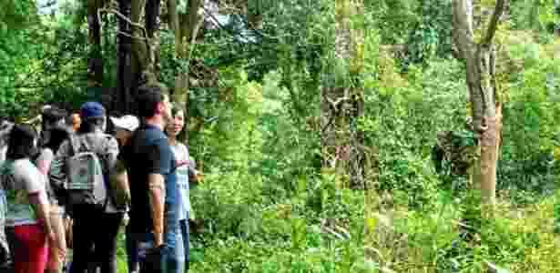 30.jun.2017 - A aquilária é alvo de exploração ilegal de madeira - Ingrid Piper - Ingrid Piper