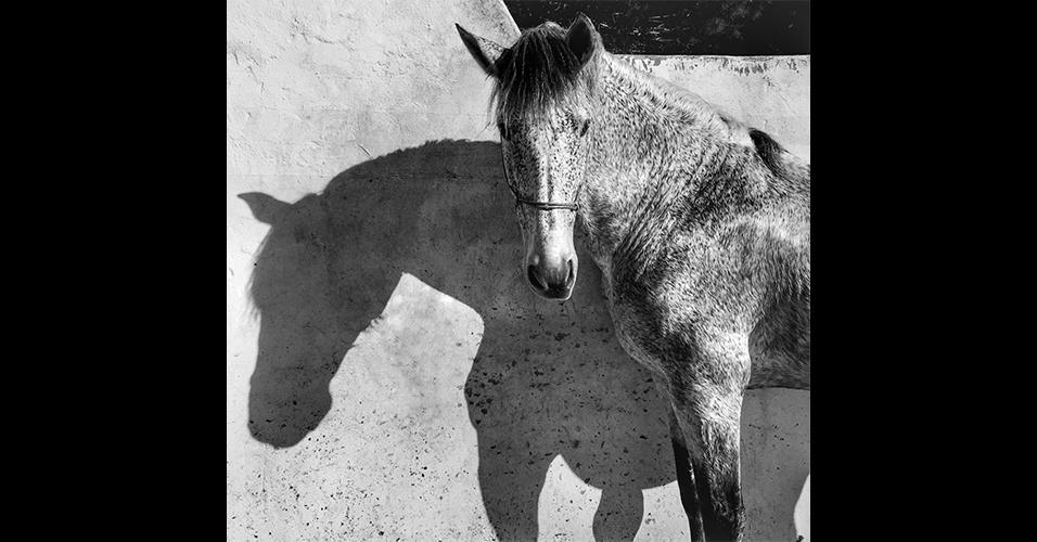 Foto tirada por Francesca Tonegutti com um iPhone 6. A imagem levou o 1º lugar na categoria animais