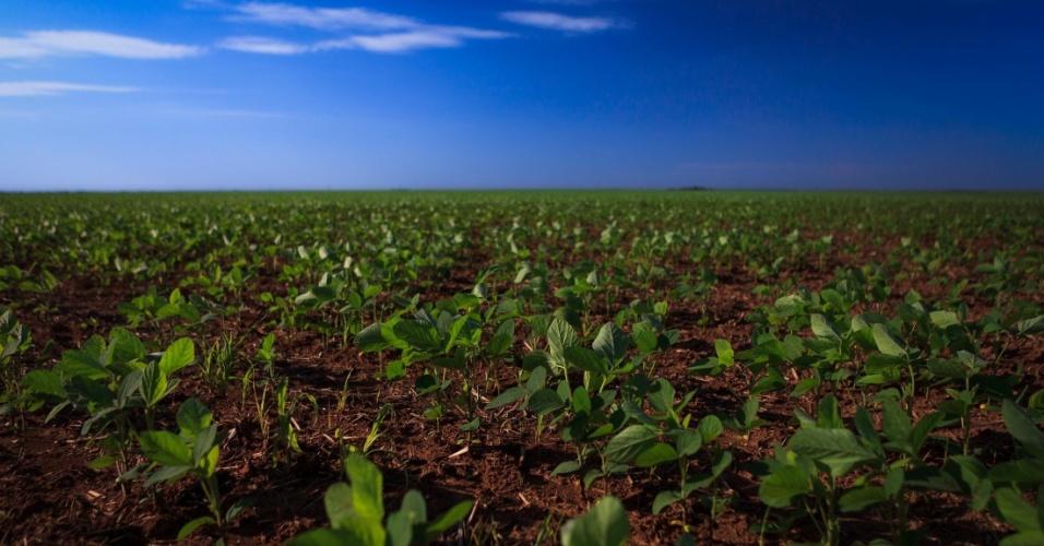 Plantação de soja se perde no horizonte. Embora gere riqueza para os produtores, o ciclo da soja não melhora a situação da população local em Campos Lindos, onde há um dos piores IDHs (Índice de Desenvolvimento Humano) do Brasil