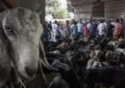 Opinião: Feriado islâmico do sacrifício ensina lições sobre obediência cega e moral - Tumpa Mondal/Xinhua